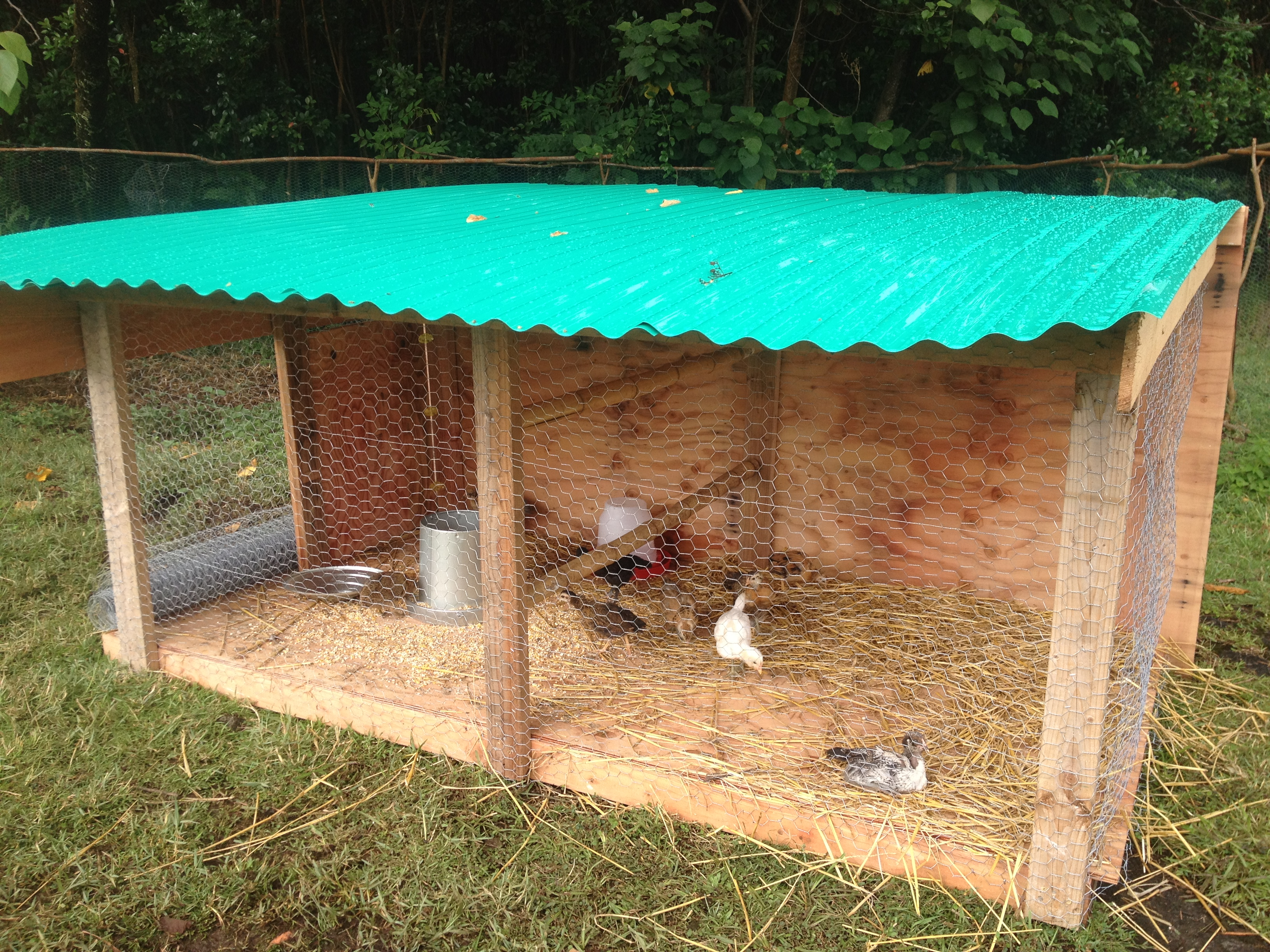Useful how to make a baby chicken coop my pet chick for Build your own duck house