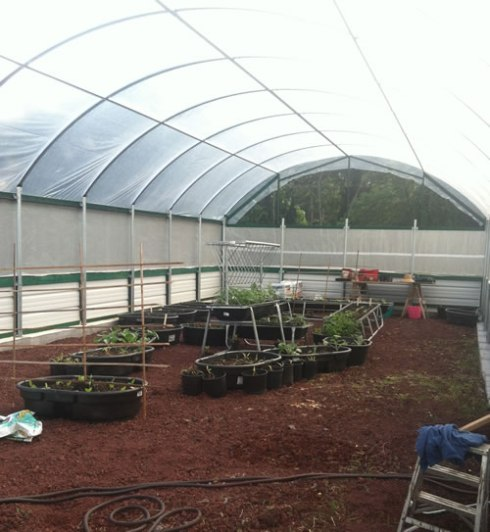 greenhouse_before
