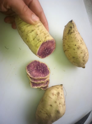 sweet_purple_potato